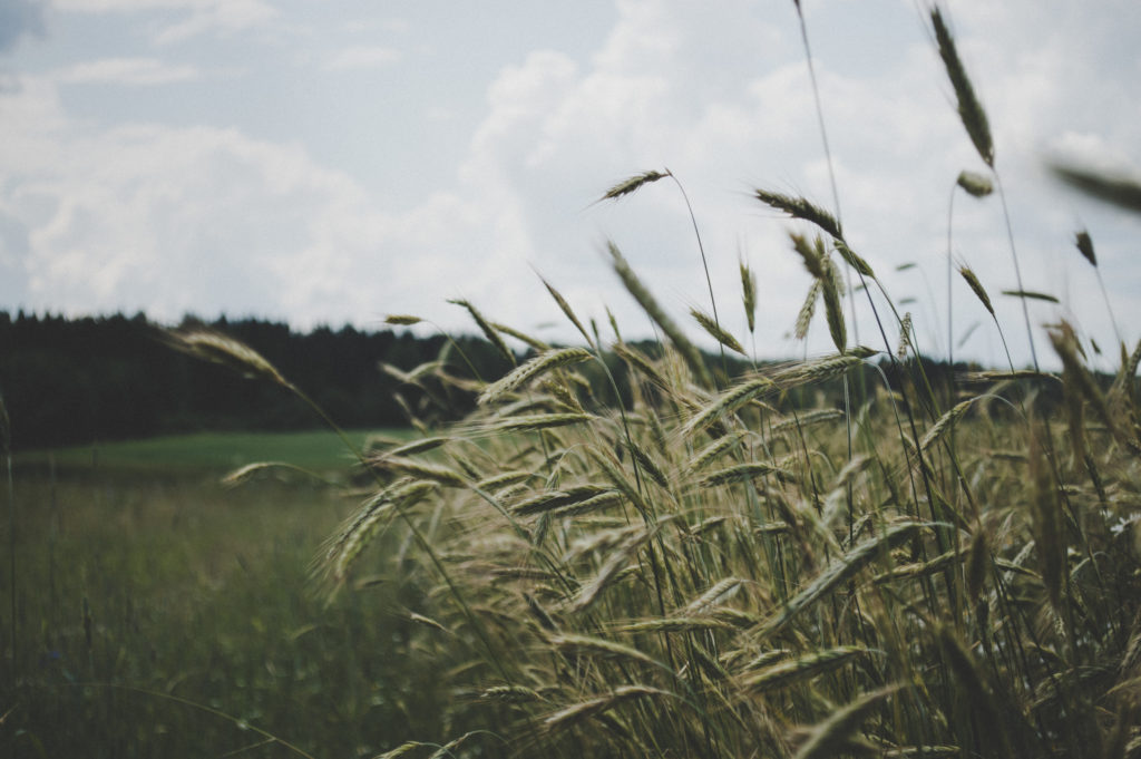 close-up-country-countryside-field-focus-grass-1423629-pxhere.com