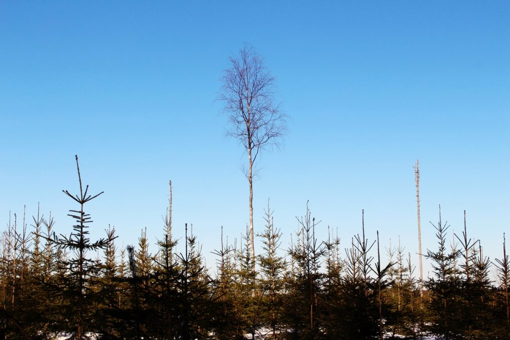 tree-forest-grass-branch-winter-plant-143769-pxhere.com